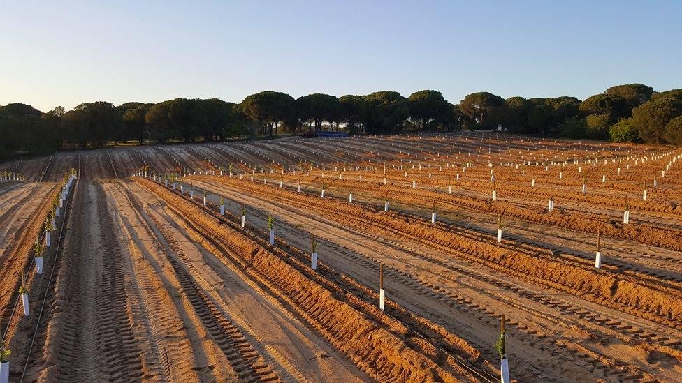 plantação de pomar