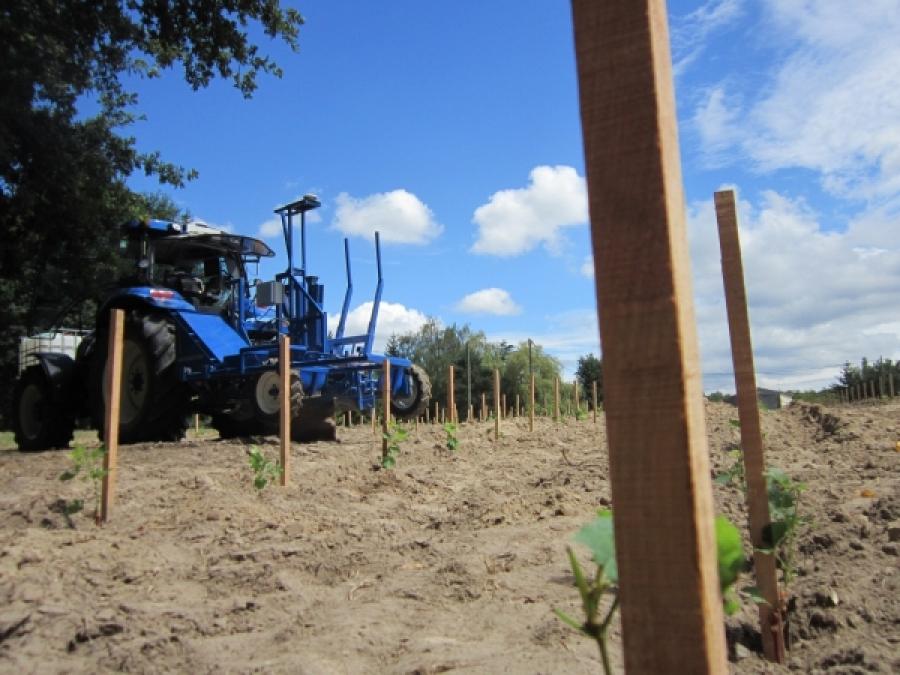plantation mécanique de vigne3
