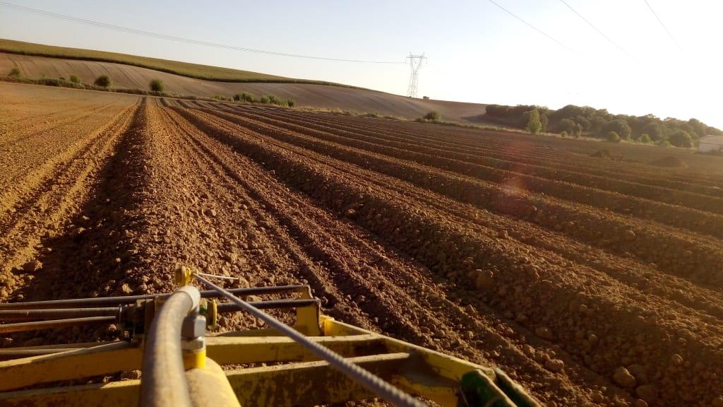 preparation terrain plantation oliviers