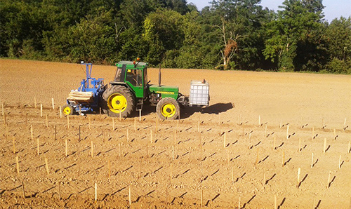 vineyard planting