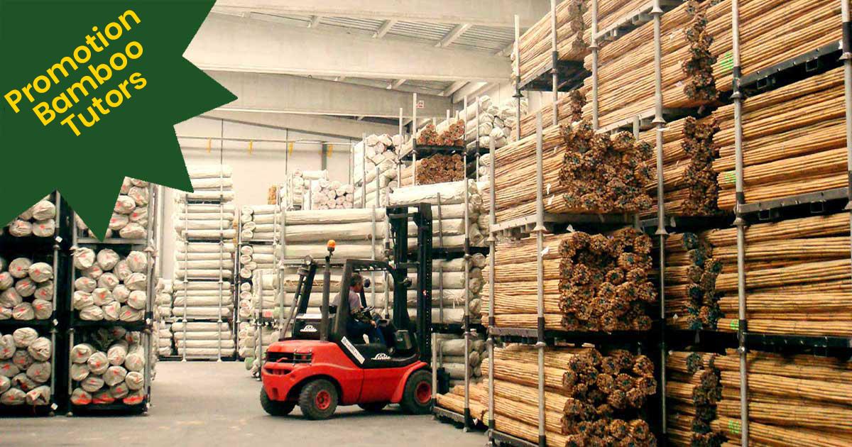 Comprar Bambu Planta