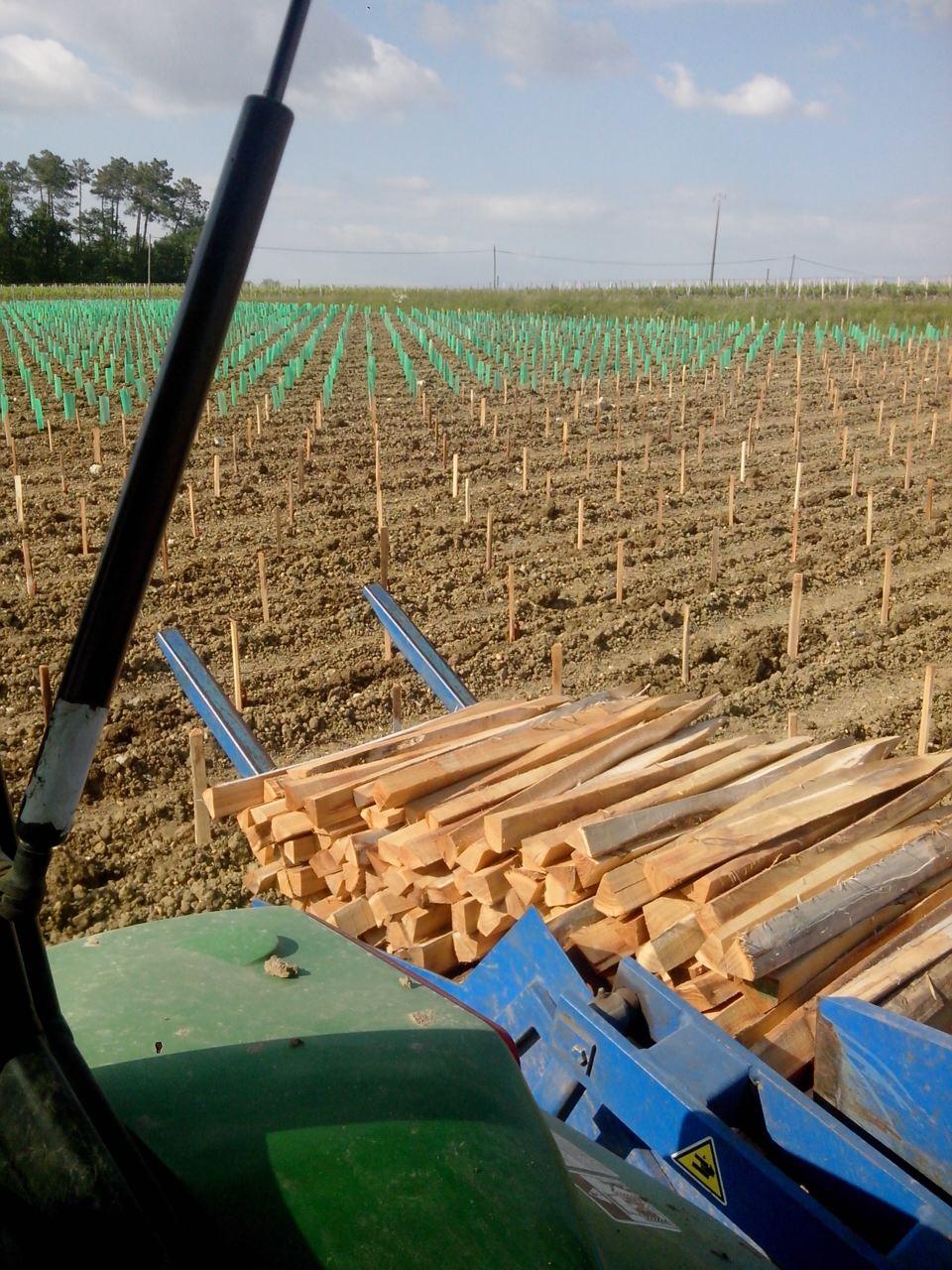 plantaçao de vinha3