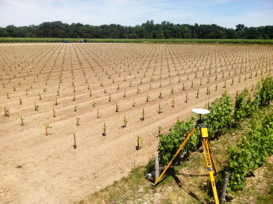 vineyard mechanized planting